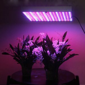 LED Grow Light Review