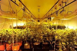 Indoor Grow Light