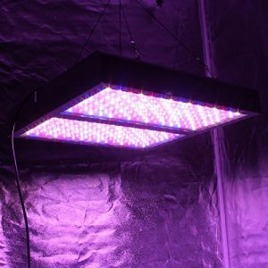 Indoor Grow Light