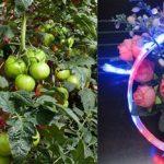 cheap Grow Light For Indoor