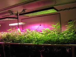 Indoor Grow Light Reflector Hood