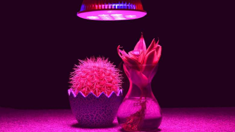 grow light for plants